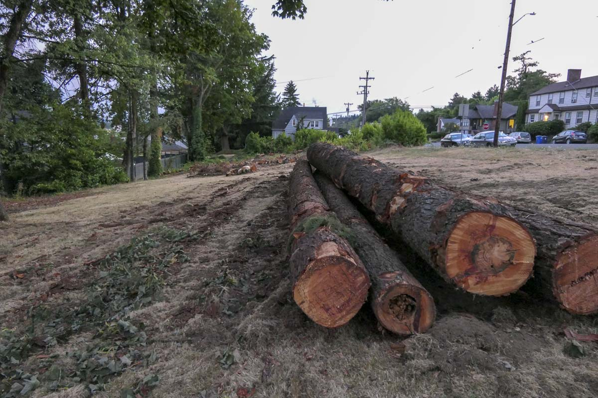 Clear cutting in a lot at NE 6th and Garfield in downtown Camas has become a flashpoint for citizens looking for better tree protections. Photo by Chris Brown