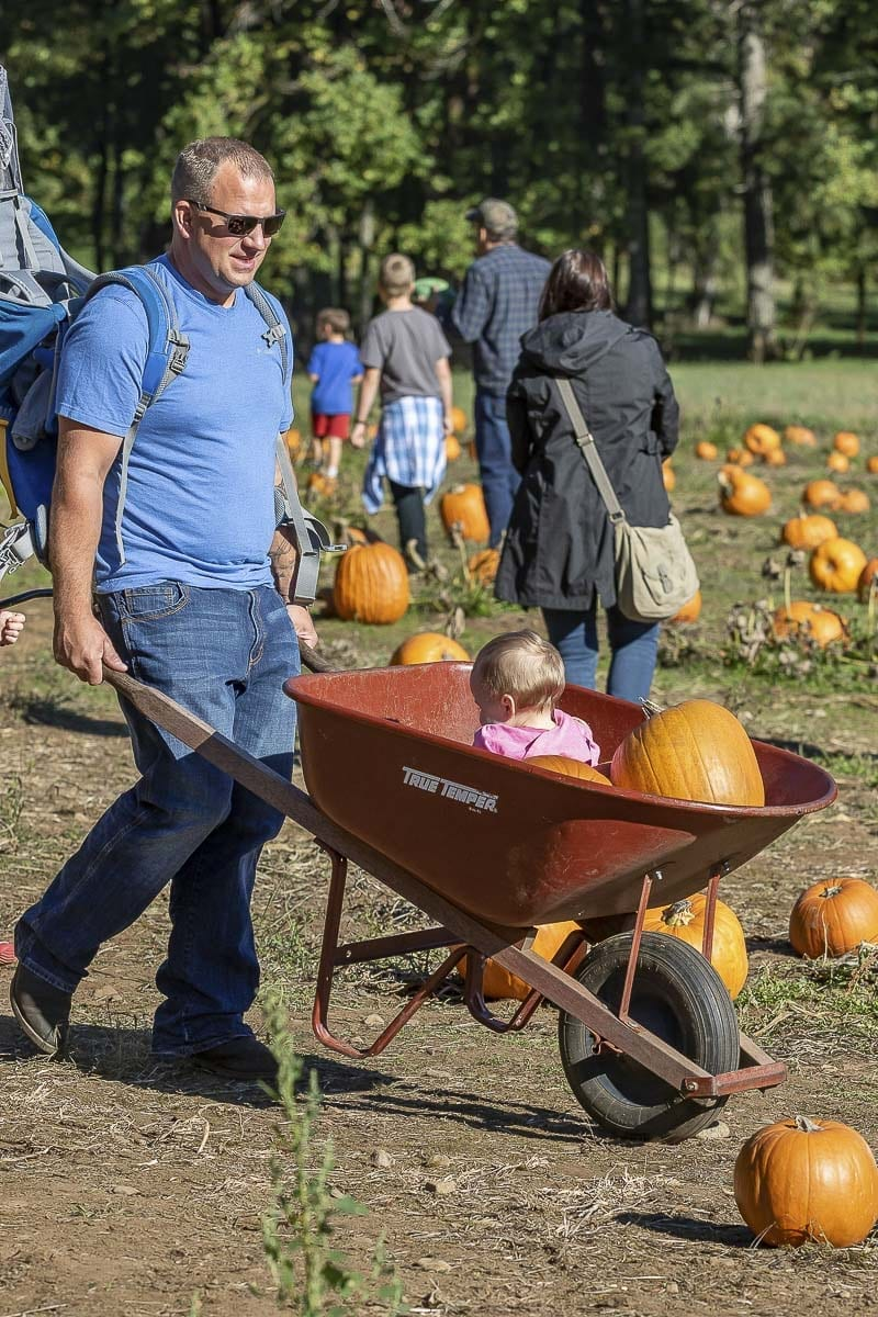 Ryan Johns pushes his daughter Lyla around the pumpkin patch at Pomeroy Farm. Photo by Mike Schultz