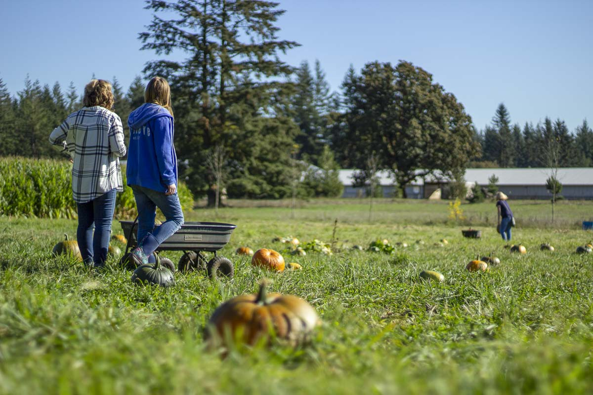 People venture out into the fields at Waltons Farms in Camas to find the perfect pumpkins. Photo by Bailey Granneman