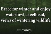 Brace for winter and enjoy waterfowl, steelhead, views of wintering wildlife