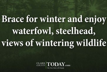 Brace for winter and enjoy waterfowl, steelhead, views of wintering wildlife