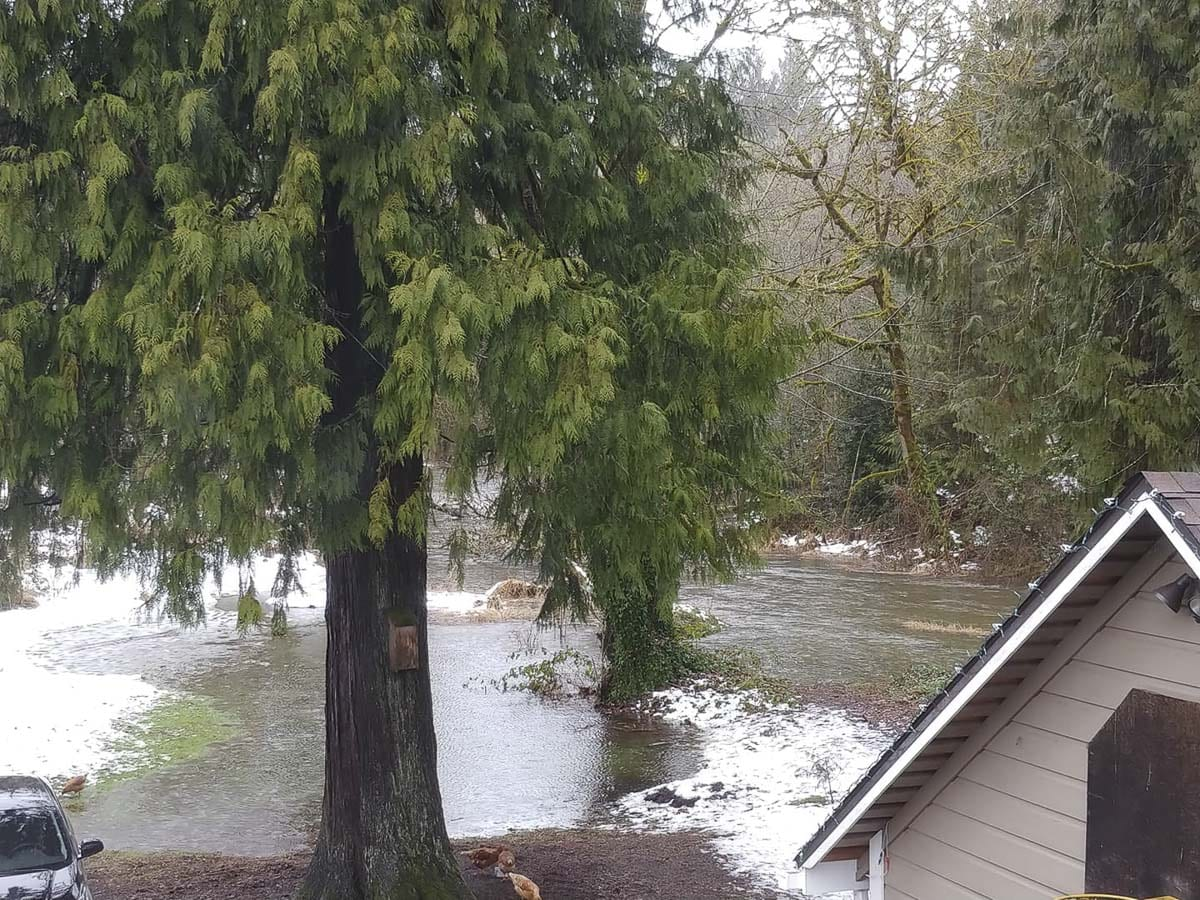 Chelatchie Creek in Amboy flooding Jessica Reeves' backyard. Photo courtesy Jessica Reeves