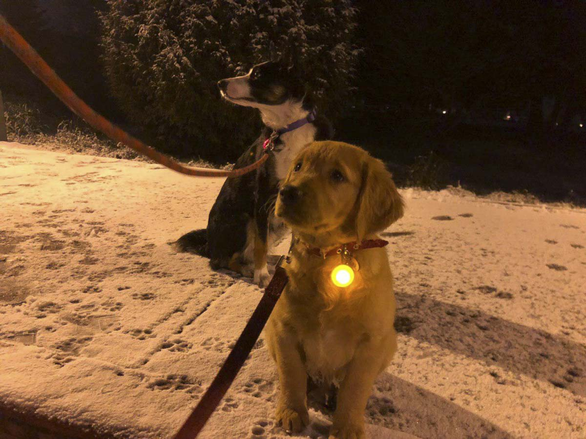 Midna and Kip enjoy a walk in the snow on Monday night. Photo courtesy of Karen Brown