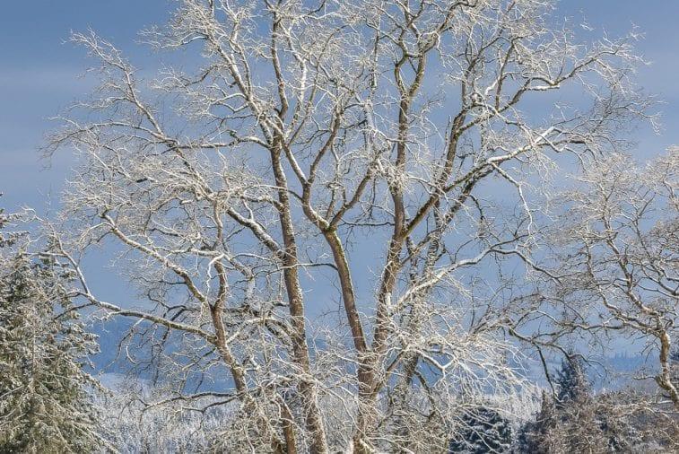 Snow-Ridgefield-2-9-19-01