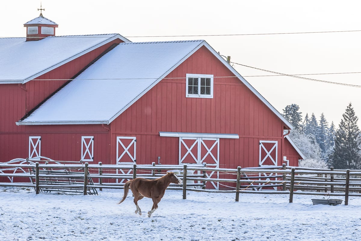 A horse enjoys the snow at a farm in Ridgefield. Photo by Mike Schultz