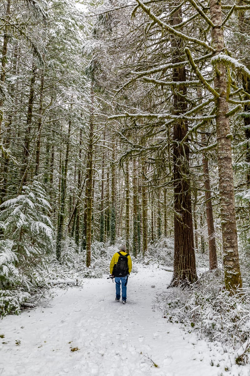 Someone enjoys a walk through the snowy woods near Upper Lucia Falls in north Clark County. Photo by Mike Schultz