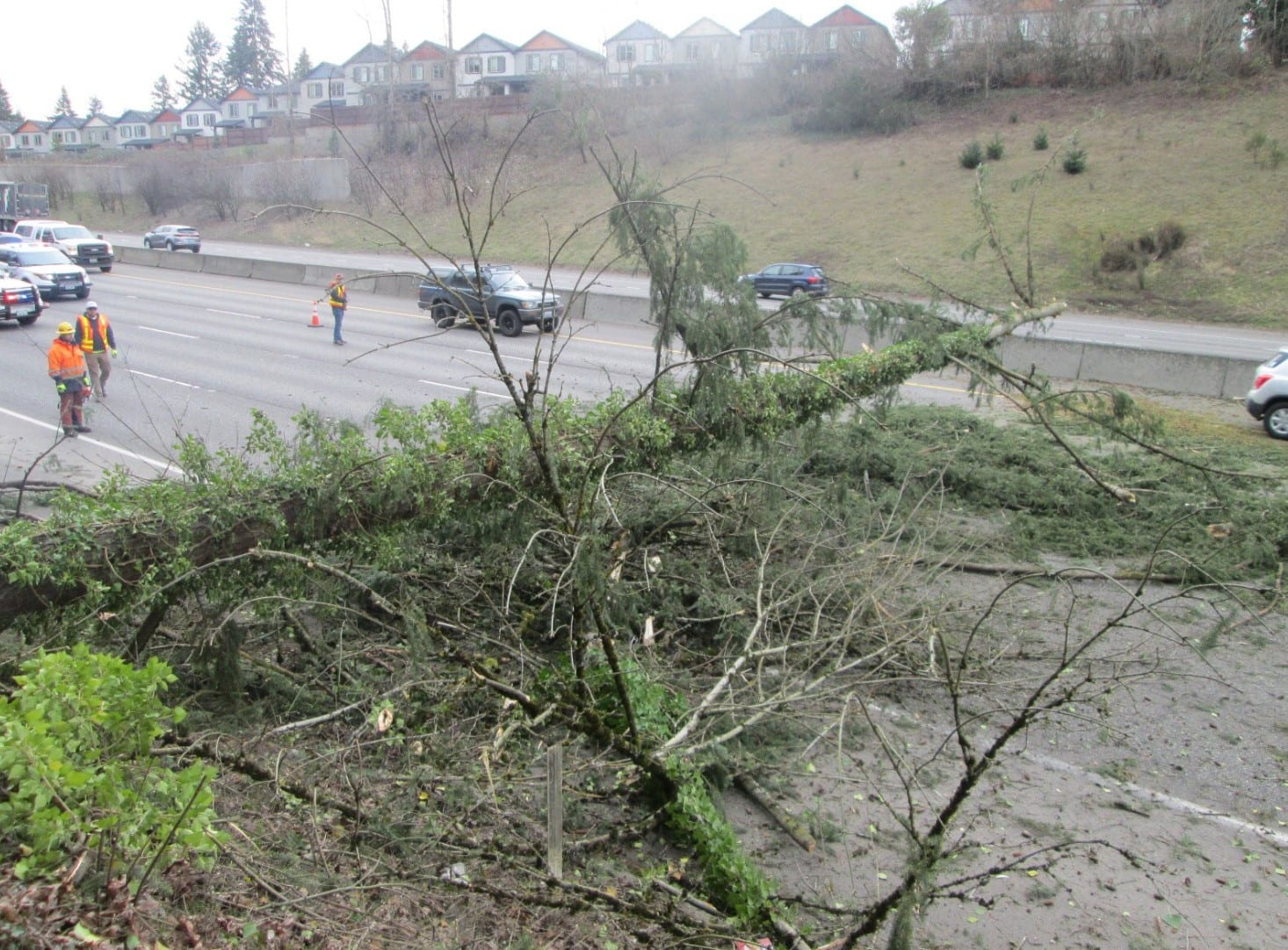Traffic squeezes by a fallen tree on I-5 Northbound in Salmon Creek on Tuesday. Photo courtesy Washington State Patrol