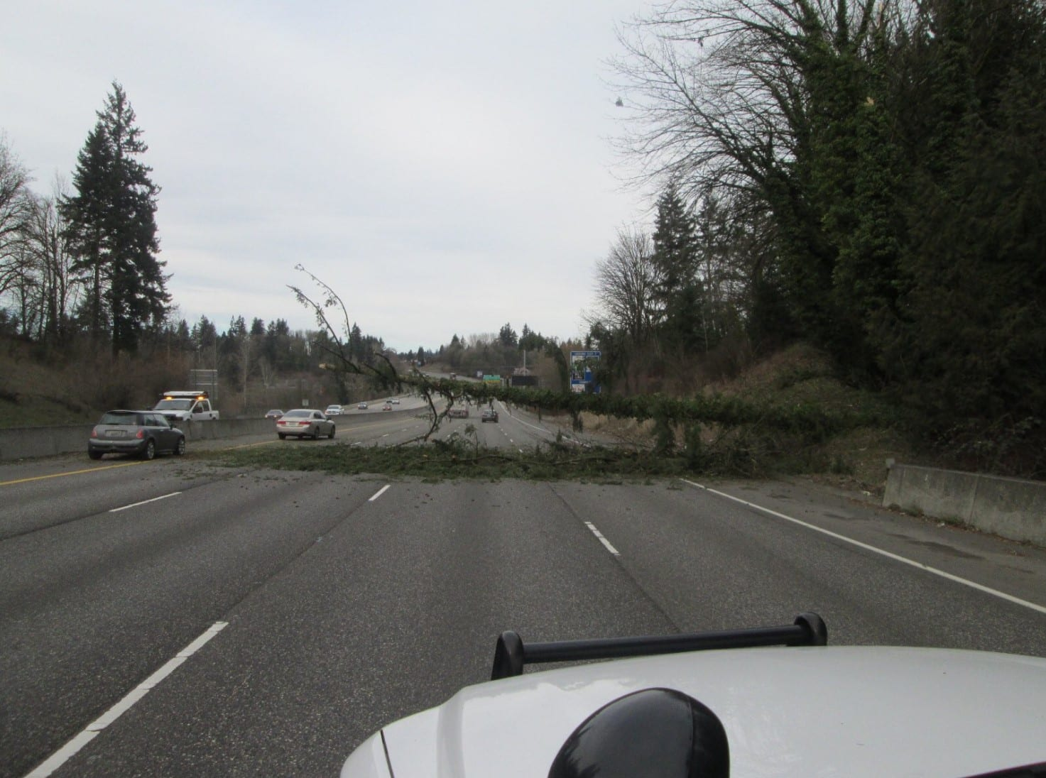 The view from a Washington State Police trooper's vehicle of a tree down across I-5 northbound in Salmon Creek on Tuesday. Photo courtesy Washington State Patrol.