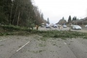 Fallen tree temporarily blocks I-5 northbound in Salmon Creek