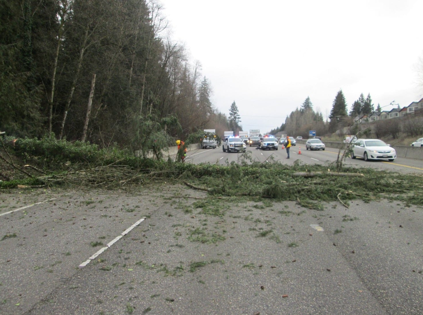tree fell along I-5 northbound in Salmon Creek on Tuesday afternoon. Photo courtesy Washington State Patrol