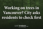 Working on trees in Vancouver? City asks residents to check first