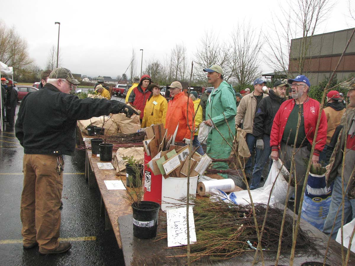 Thousands of trees will be offered for sale again this year by the Clark County Farm Forestry Association during a public sale set for Sat., March 16, beginning at 8 a.m., at the Albertson's parking lot, 2108 W Main St., Battle Ground. Photo courtesy of Marvin Case