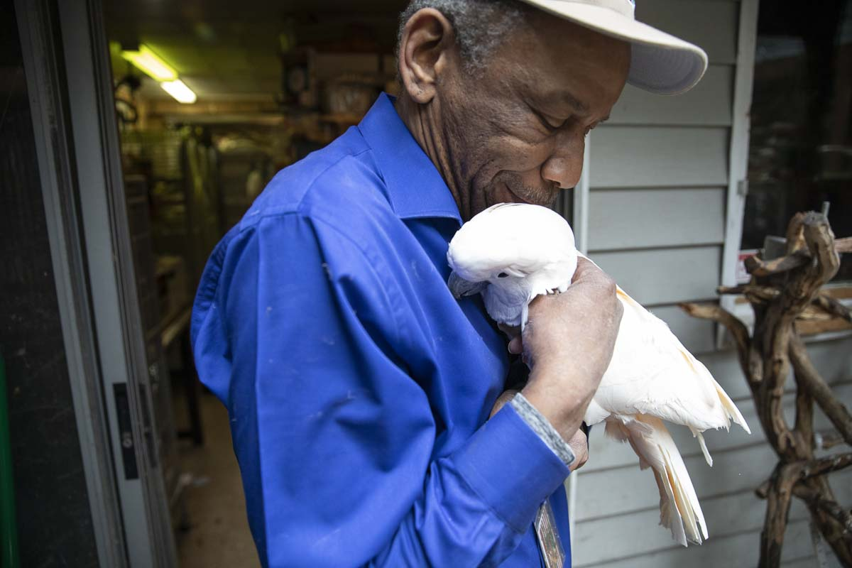 "Chris ""Birdman"" Driggins holds Goldy, a rescued 19-year-old Moluccan Cockatoo. Photo by Jacob Granneman"