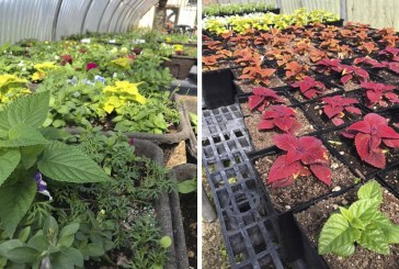 Battle Ground Public Schools to host annual Plant and Greenhouse sales