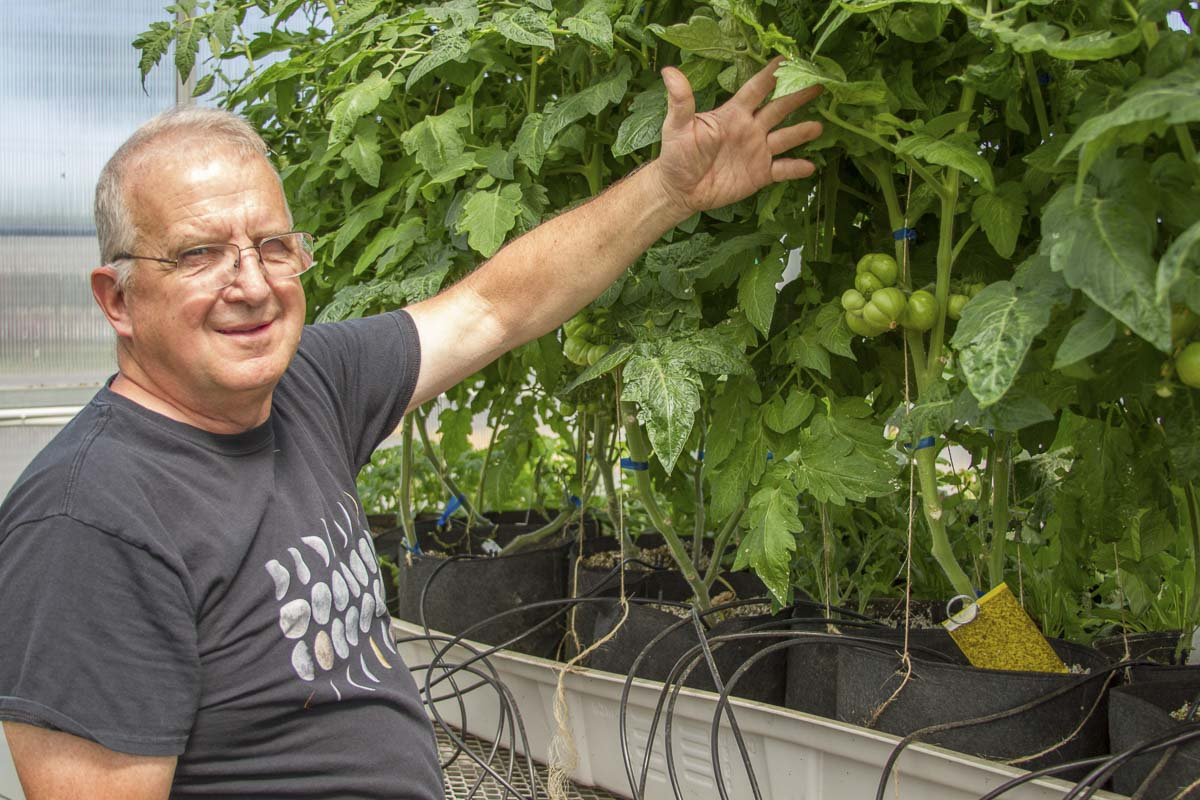 Joe Bosch proudly shows off the hydroponic tomatoes this year's class successfully grew. Photo courtesy of Woodland School District