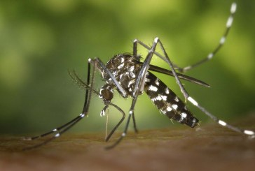 County officials urge residents to help control mosquitos