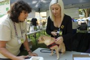 Micro-chipping: Turning lost into found