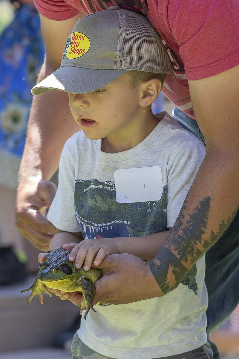 Maverick Ripp holds his frog in preparation for the 52nd Annual Frog Jump, an event that has remained a tradition for many generations of Woodland residents at Planters Days. Photo by Mike Schultz