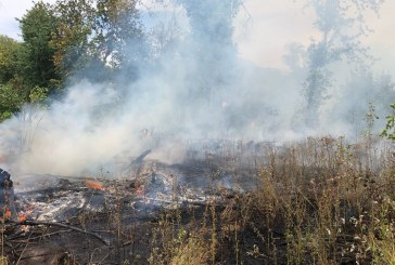 Crews respond to trees, brush fire near NE 179th Street