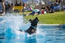 Dogs, sheep, children highlight another big day at the fair
