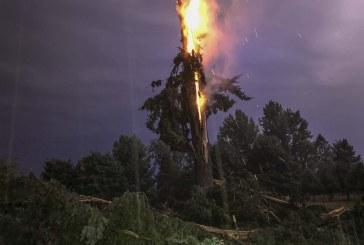 VIDEO: Lightning bolt destroys tree near La Center