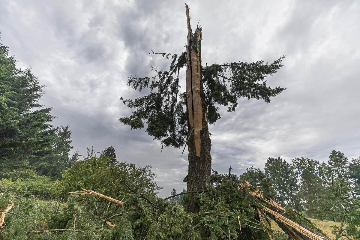 This Douglas Fir was demolished by a bolt of lightning around 5:30 a.m. this morning in a field near La Center. Photo by Mike Schultz