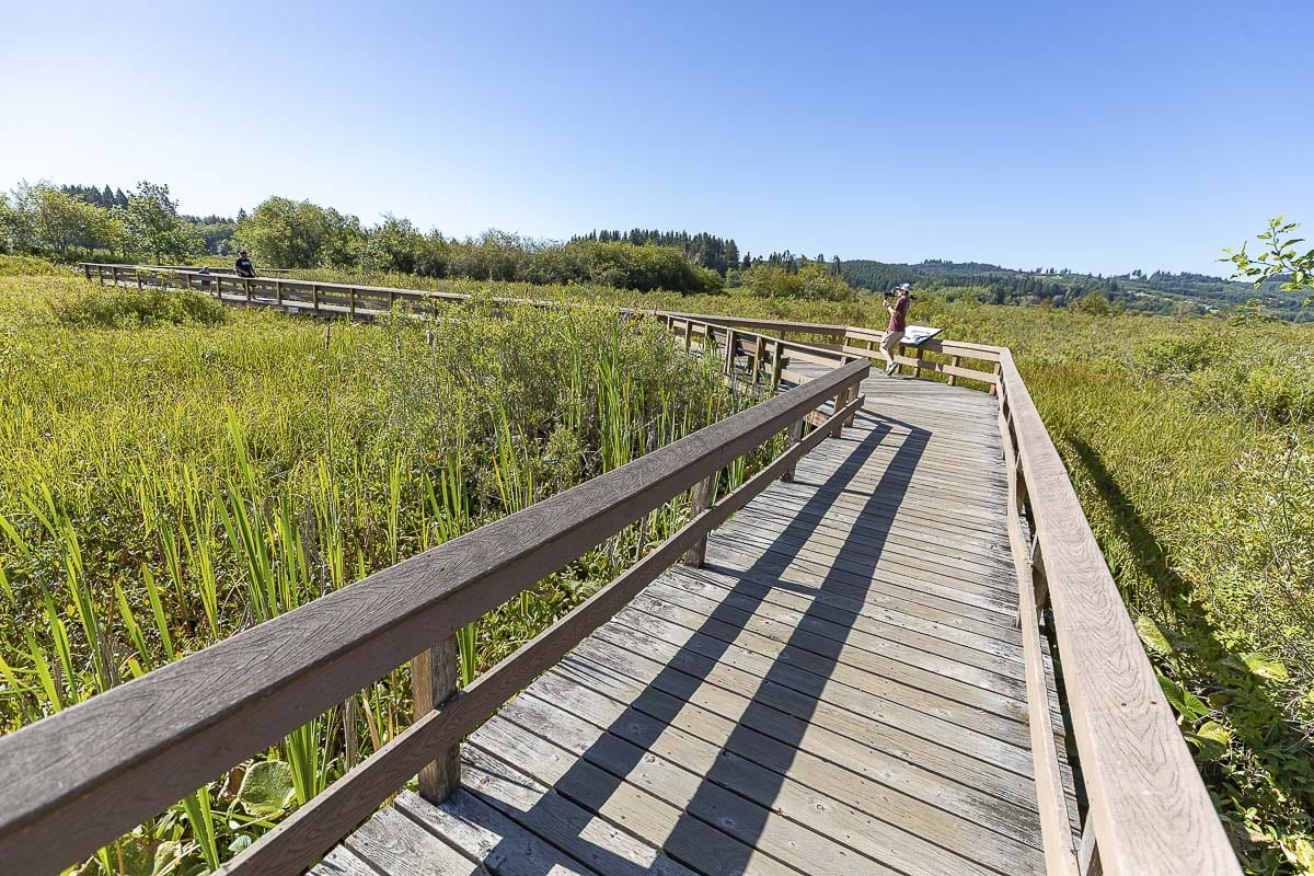 Large wooden walkways shown here criss-cross the wetland area adjacent to Silver Lake, behind the visitor center. They are ADA accessible. Photo by Mike Schultz