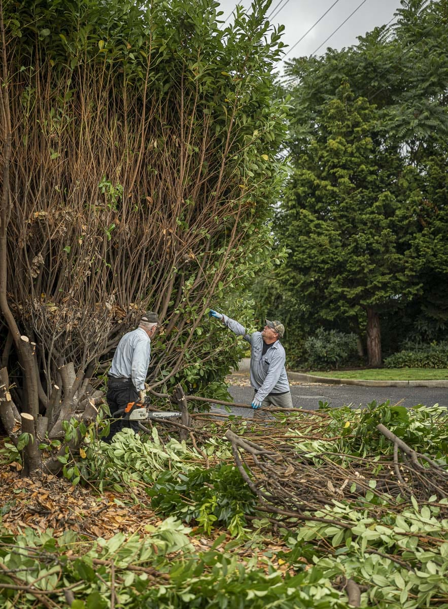 Lions Club members Dick Golladay (left) and Chris Dierickx (right) are shown here cutting back an overgrown laurel hedge at the Treasure House cleanup. Photo by Jacob Granneman
