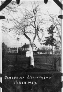 Strongly rooted in the community, Vancouver's legendary Old Apple Tree turns 193 this year. Area residents can celebrate at the annual Old Apple Tree Festival, 11 a.m. to 3 p.m. Sat., Oct. 5, at the Old Apple Tree Park. Photo courtesy of city of Vancouver