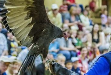 Ridgefield BirdFest & Bluegrass Festival to celebrate 20th anniversary