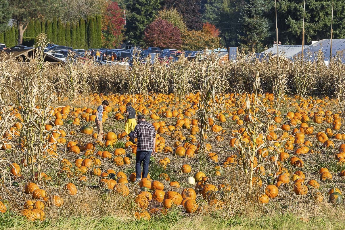 Bi-Zi Farms grows all of its thousands of pumpkins onsite, and features a few varieties with many sizes to choose from. Photo by Mike Schultz