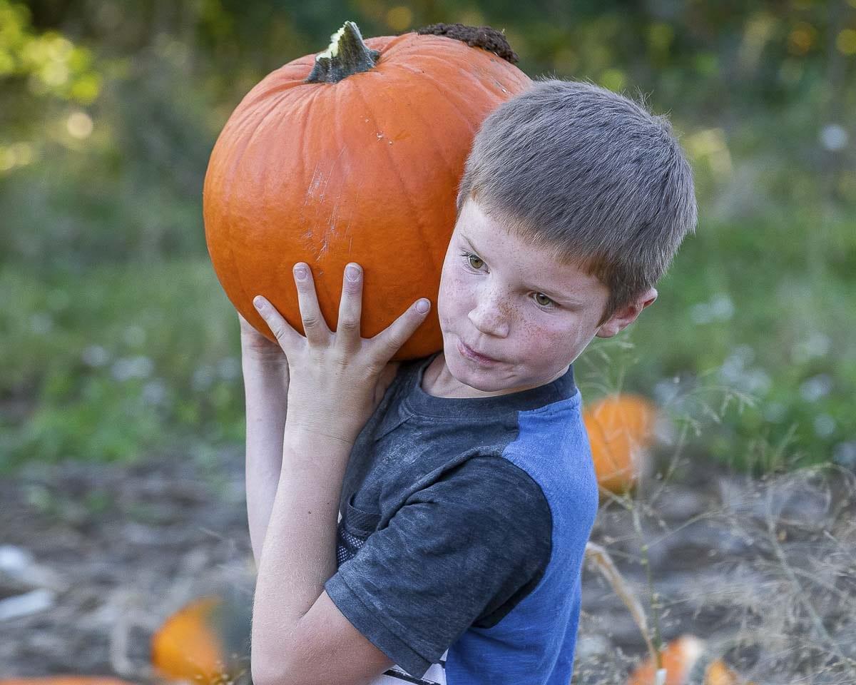 Kaden Tikka carries his chosen, perfect pumpkin back from the pumpkin patch at Bi-Zi farms. Photo by Mike Schultz