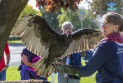 Annual Ridgefield BirdFest & Bluegrass Festival once again delights young and old