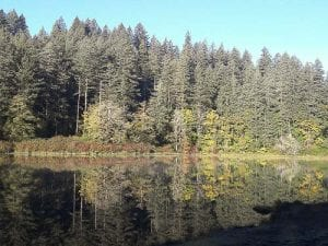 Responding to a report of a blue-green algae bloom in Fallen Leaf Lake, Clark County Public Health staff visited the lake and confirmed the presence of blooms near the bank, extending north from the Fallen Leaf Lake Shelter. Photo courtesy of city of Camas