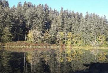 Clark County Public Health issues advisory for Fallen Leaf Lake due to blue-green algae bloom