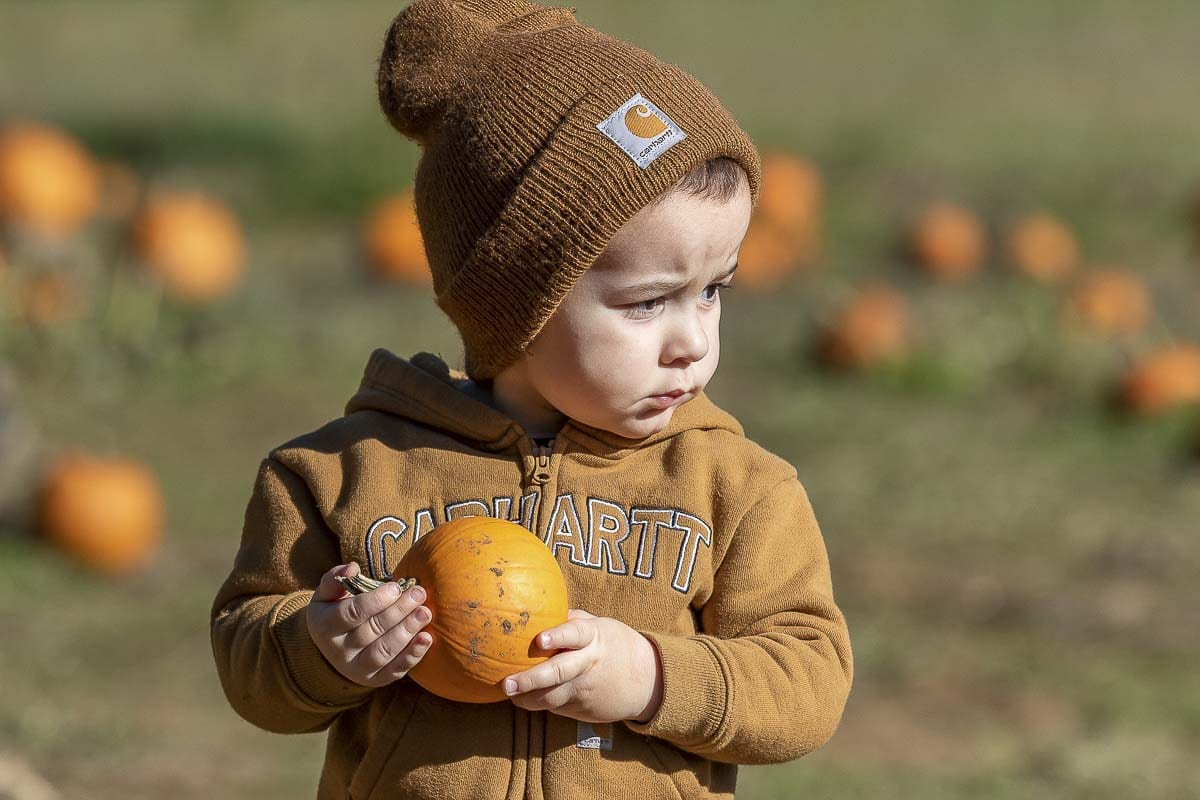River McPoil of Vancouver finds his favorite pumpkin at Pomeroy Farm's Pumpkin Lane in 2018. Photo by Mike Schultz
