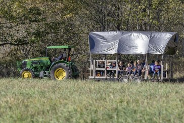 Heart of the Harvest: Pomeroy Farm's Pumpkin Lane