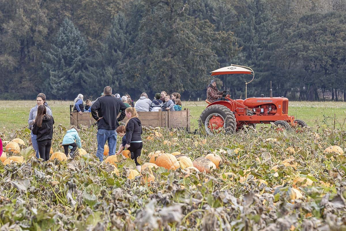 Luke Donald drives the hayride tractor through the fields of The Patch in Woodland. The hayride runs every weekend in October. Photo by Mike Schultz