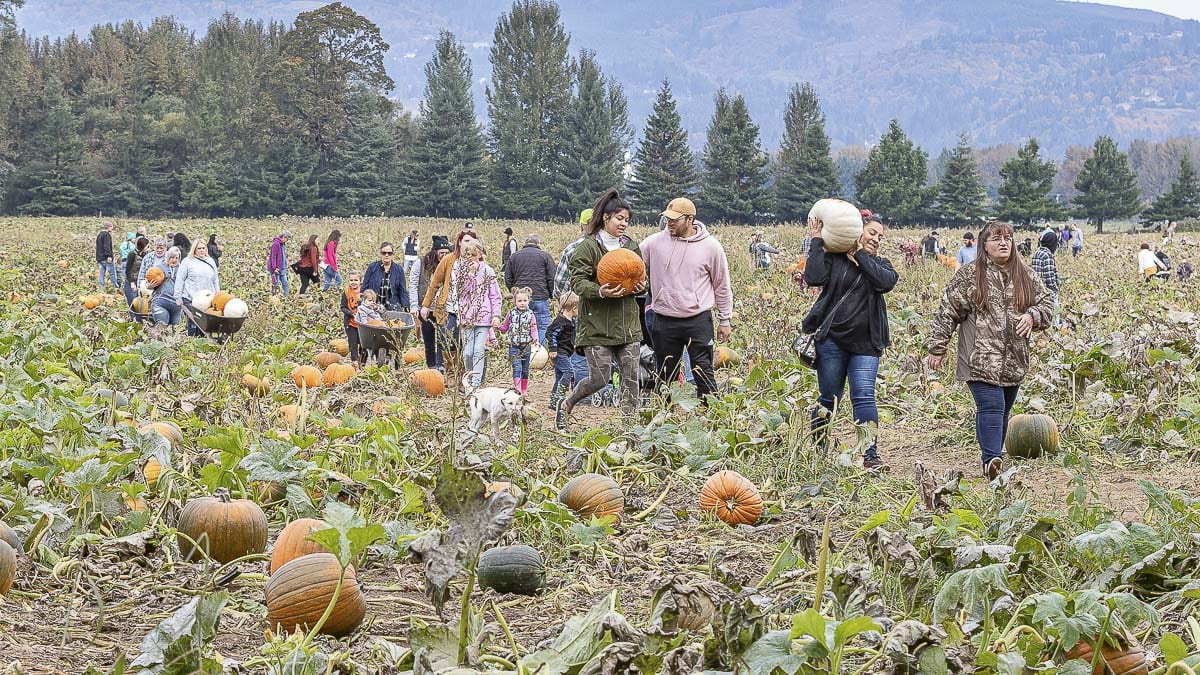 The Patch features acres of pumpkins grown in the sandy soil of the Woodland Bottoms. Many grow to be larger than normal here. Photo by Mike Schultz