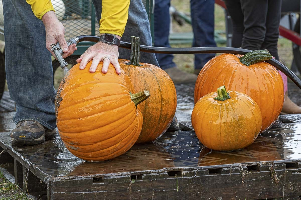 A washing station is set up at The Patch so you can get your pumpkins clean of all the dirt and mud before loading them up. Photo by Mike Schultz