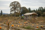 Heart of the Harvest: Vancouver Pumpkin Patch