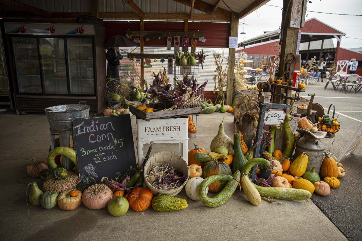 Farm-fresh produce and gourds are for sale at Velvet Acres Gardens' Vancouver Pumpkin Patch. A whole farm store is open for business. Photo by Jacob Granneman