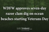 WDFW approves seven-day razor clam dig on ocean beaches starting Veterans Day