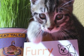 Furry Friends celebrates #GivingTuesday by pledging to raise $6000 for medical expenses