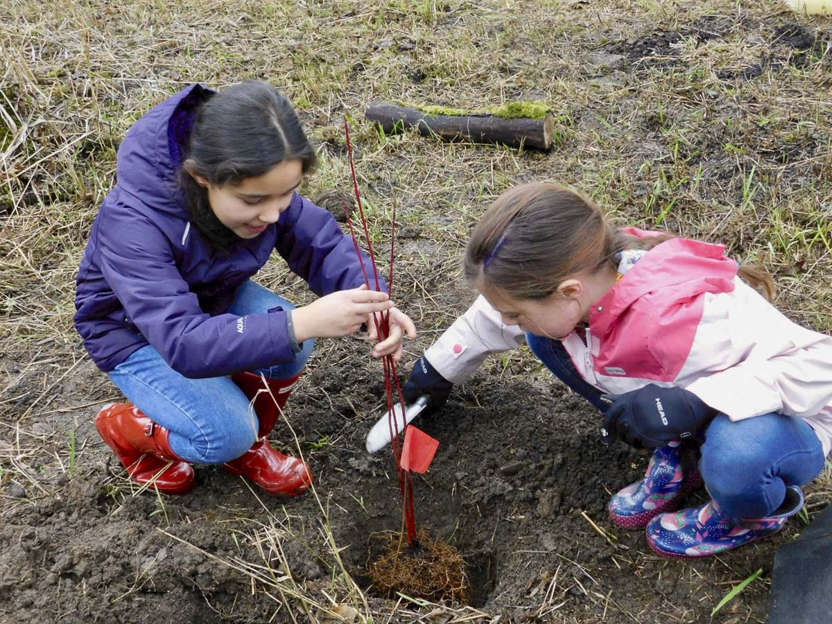 South Ridge Elementary School students worked in teams to plant trees. Photo courtesy of Ridgefield Public Schools