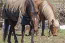 County officials say codes for equestrian businesses need a closer look