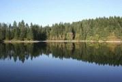 Public Health issues blue-green algae advisory for Lacamas, Round lakes