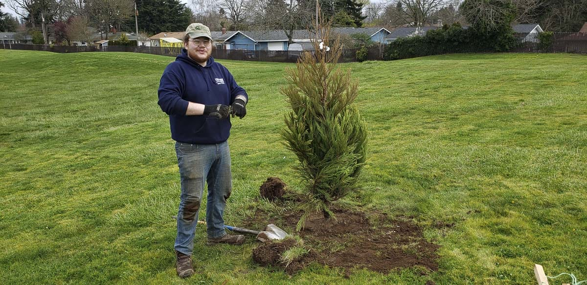 Vancouver Urban Forestry intern Matt McLean plants one of this year's trees at the Volunteer Grove. Photo courtesy of Vancouver Parks and Recreation
