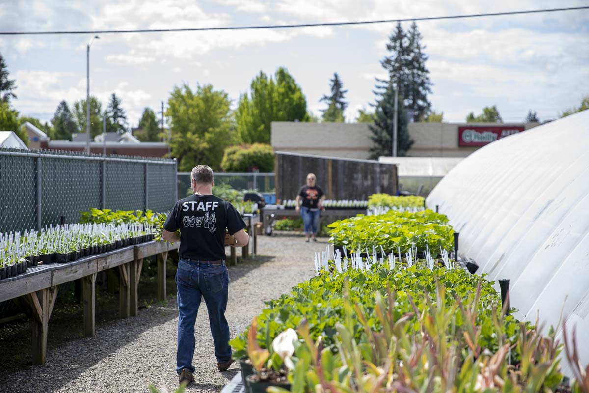 Teams of staff members, teachers, and volunteers helped move the Battle Ground School District's annual plant sale online this year. Photo by Jacob Granneman