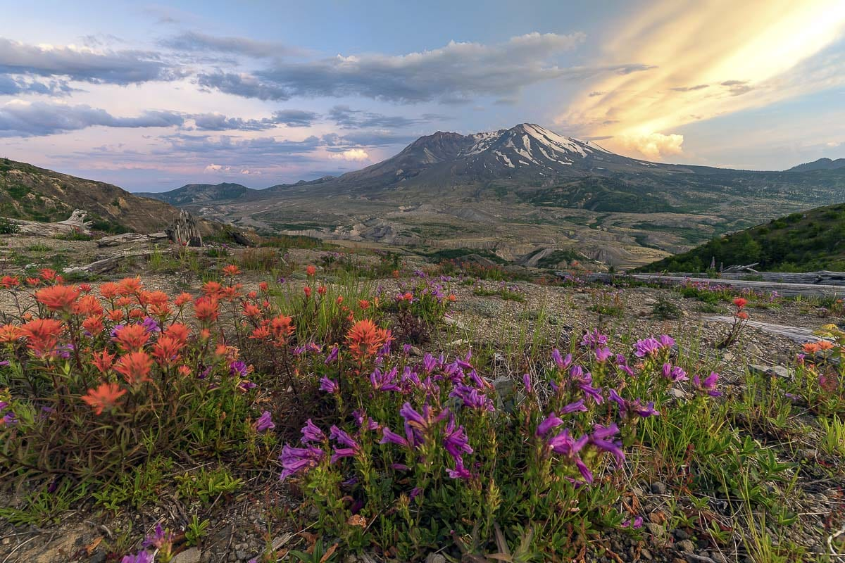 This photo of Mt. St. Helens taken by Clark County Today Photographer Mike Schultz, shows how quickly beauty has returned to the mountain, 40 years after a major eruption. Photo by Mike Schultz